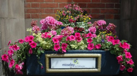 PJ Planning proud to sponsor Moseley in Bloom
